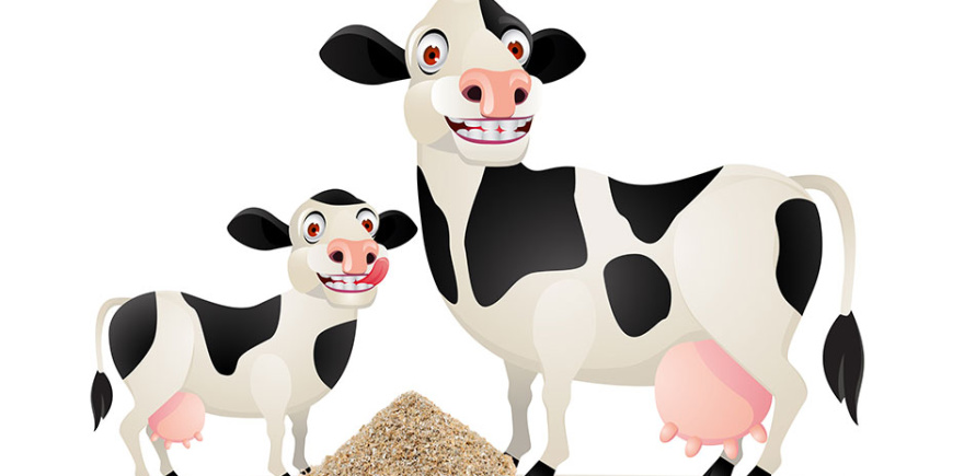 Кормление крупного рогатого скота - Мини или макси?