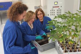 Уникальный Научно-исследовательский центр по изучению заразихи и поиску решений по контролю этого растения-паразита начал свою работу в швейцарском городе Штайн