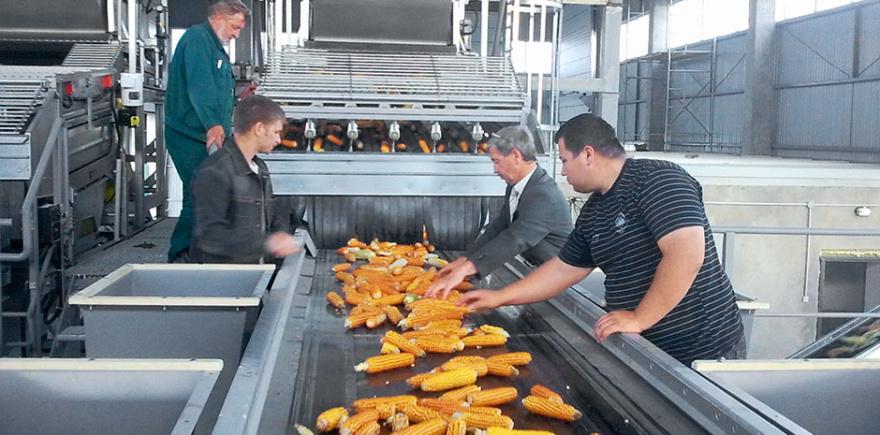 Все надежды на строительство новых кукурузо-калибровочных заводов