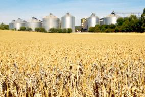 Почти треть всей английской пшеницы поставляет регион Восточная Англия
