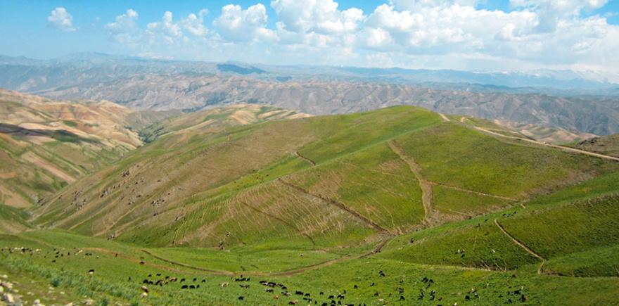 Сельское хозяйство Афганистана