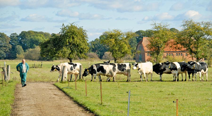 Здоровье копыт. Почему хромает корова?