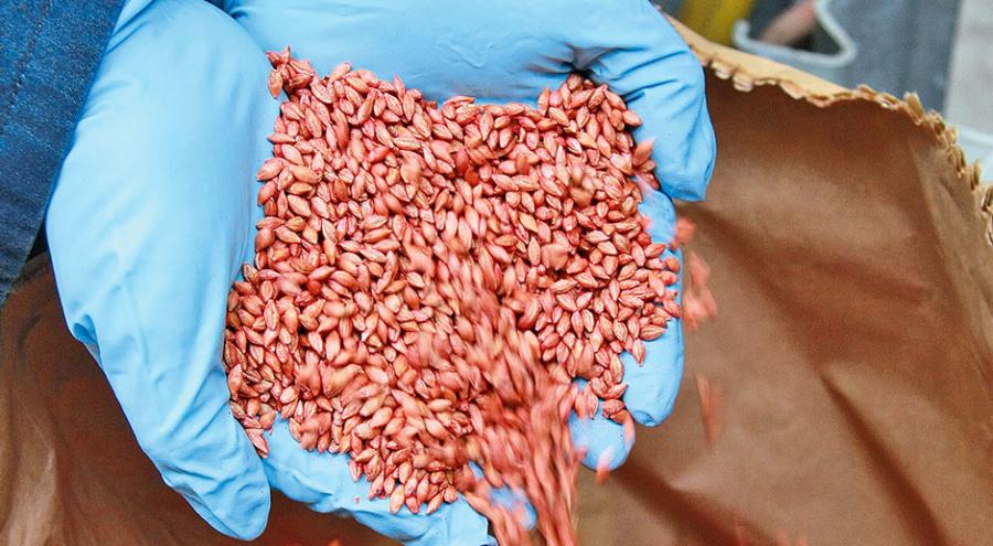 Обработка семян озимых зерновых культур защищает всходы ипомогает молодым растениям благополучно перезимовать.