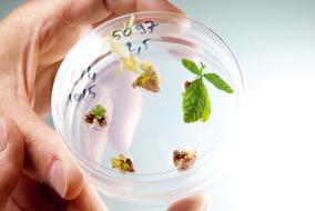 Почти половина всех посевов генномодифицированных культур в мире приходится на сою