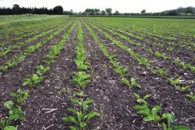 Возможность посева в мульчу и снижение риска эрозии почвы – еще один аргумент в пользу глифосата.