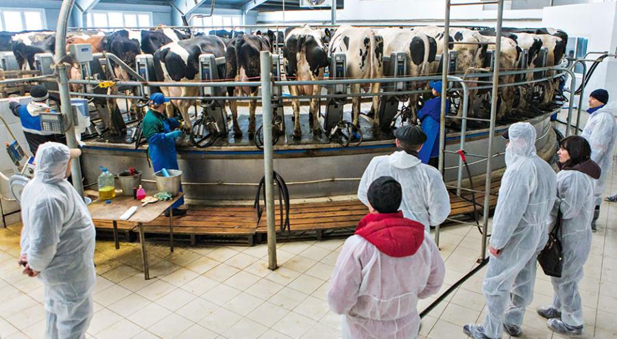 Карусель на 50 мест, а еще и «европараллель» 2х24, четыре робота VMS. ООО «ПК «Молоко» – действительно настоящая демонстрационная площадка шведского производителя доильного оборудования. Сюда и привезли делегатов тюменской конференции.