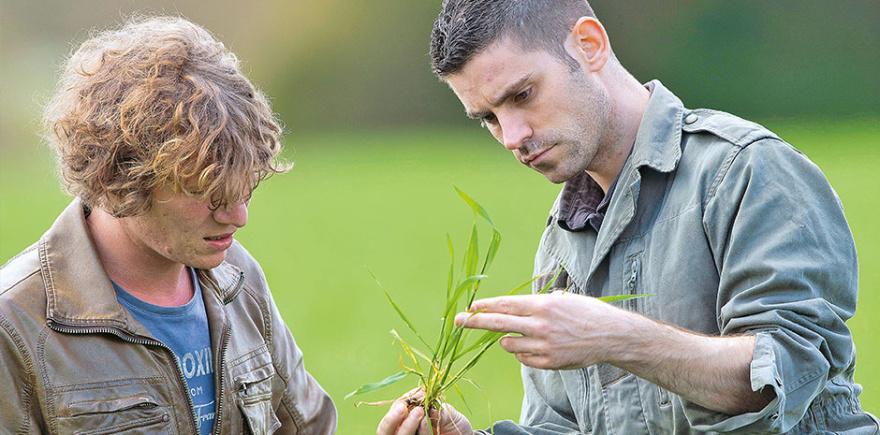 Какие заболевания могут угрожать посевам ячменя, ржи итритикале?