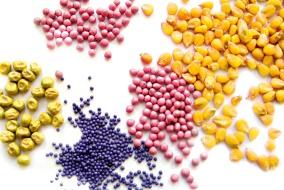 Для создания конкурентоспособного сорта требуются как минимум 12 лет и 50 млн руб. Каковы шансы отечественных производителей на рынке семян?