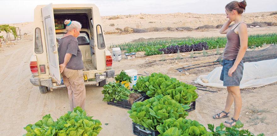 Дважды в неделю фермер Ави Аразуни отвозит готовую продукцию на рынок в Тель-Авиве.