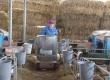 Сейчас, во время оттепели до –3°C, телятница «объезжает» своих подопечных на «молочном такси» для выпойки по «летнему графику» – дважды в сутки. Если же ударит мороз,то выпойку телят будут производить уже три раза в сутки. @ Фото: А. Андреев