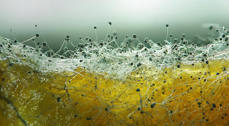 Фото: Kozorog/Shutterstock/ТАСС