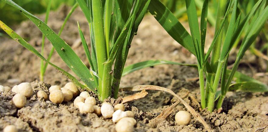 Фото: agrar-press