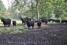 Стратегия развития мясного скотоводства на 2019-2030 годы