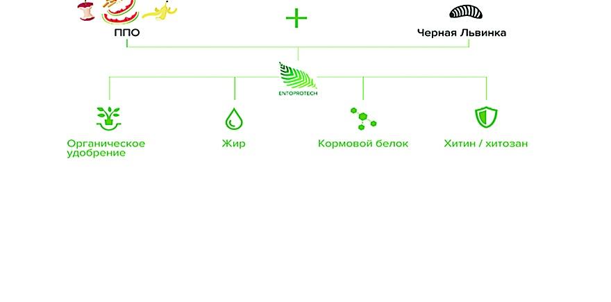 Дизайн: фирма